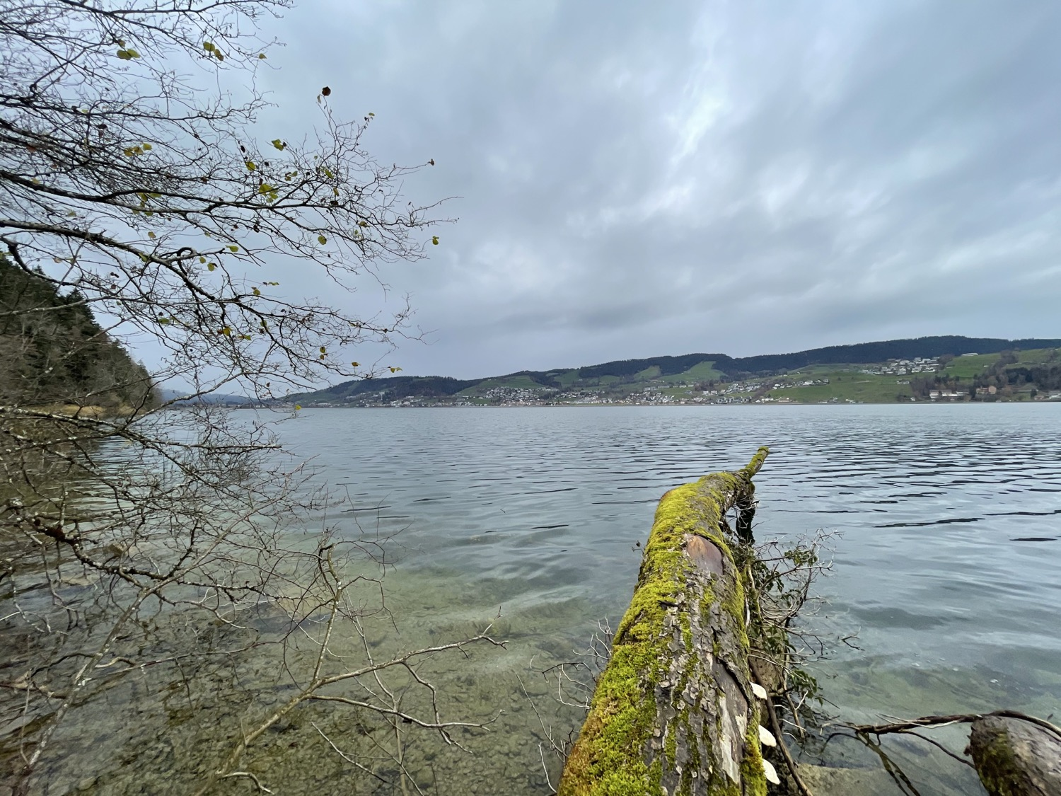 Back from the walk around the lake. Was surprised by the rain in the middle and got soaked, but otherwise, it was relaxing.
