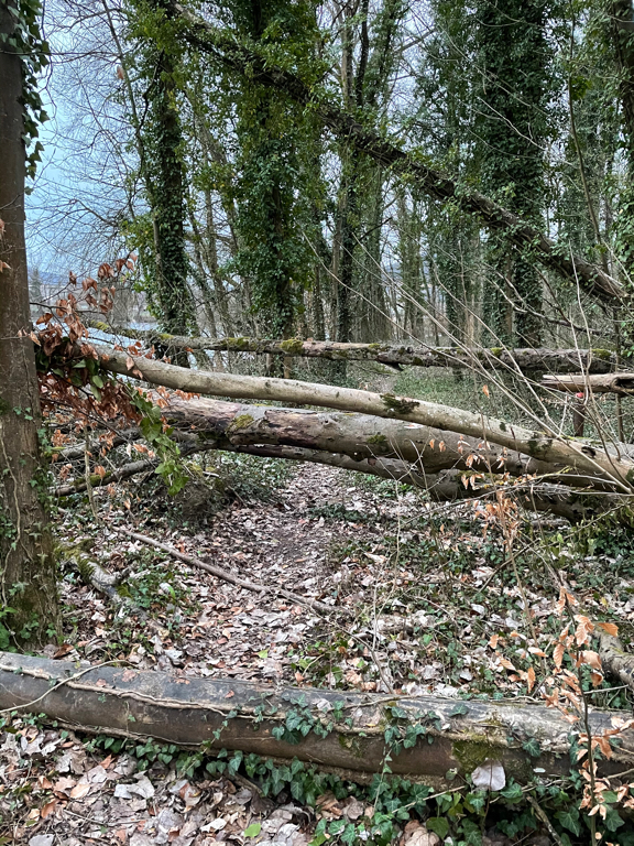 Obstacle course — fallen trees on the forest path.
