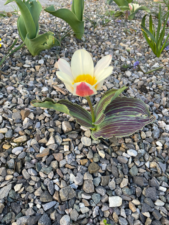A nice flower.
