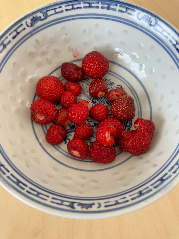 We harvested our first strawberries.