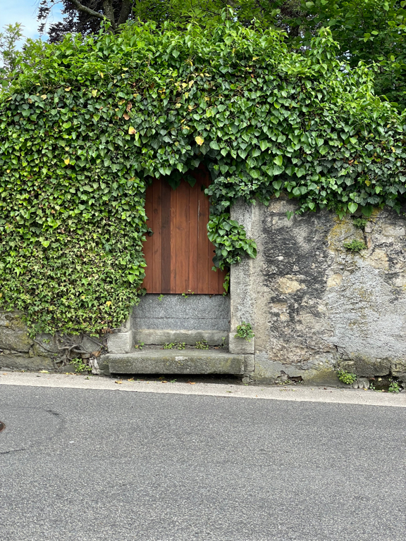 An overgrown door to which magical real will it lead me?